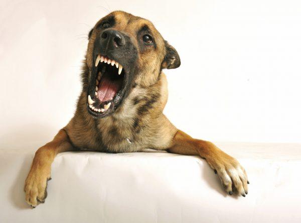 AgressiveDog