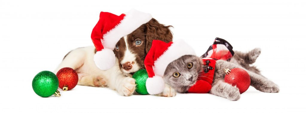 Adopt not shop' for a pet this Christmas